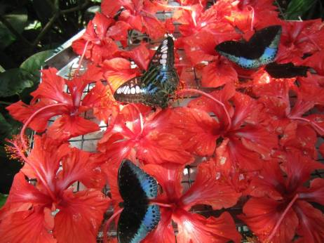 Butterfly Park in Kuala Lumpur (photo Nihal Sh)